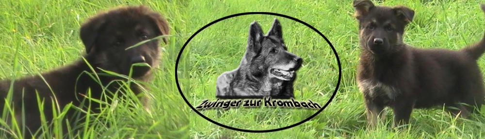 Zuchtstätte Deutscher Schäferhunde zur Krombach